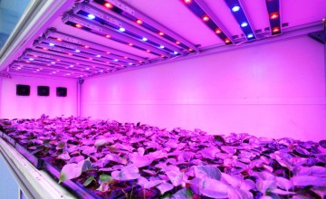 led grow light image by organicgardensupply