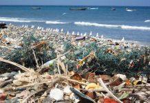 sea litter