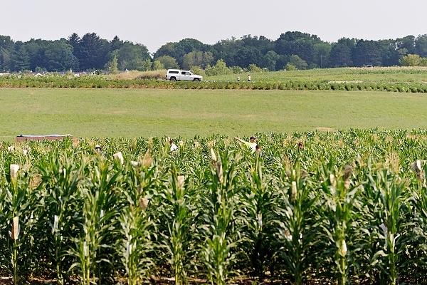corn_field_GLBRC_12_3793